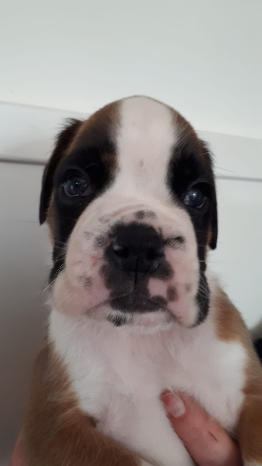 reu puppy Mega